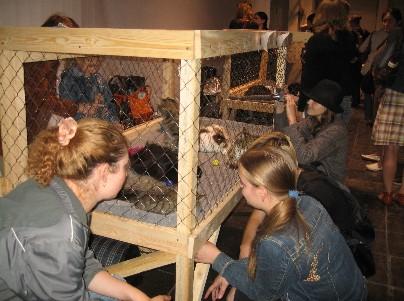 Бездомные животные из приюта ржевка