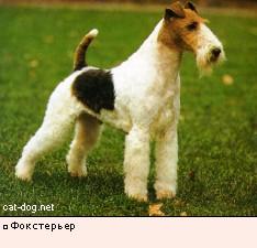 среднерусская овчарка фото