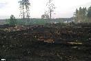На этом месте год назад стояли деревья   (Фото: dp.ru)